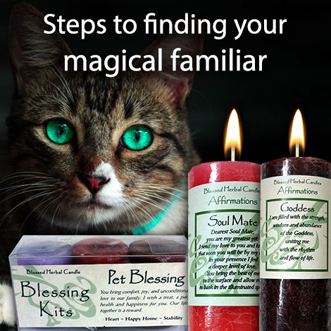 LTM Steps to finding your magical familiar
